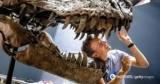Ученые выяснили, зачем динозаврам нужны были длинные хвосты